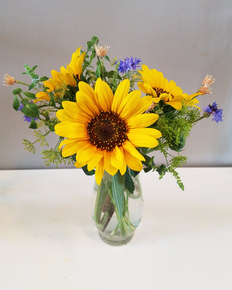 cheap petite sized sunflower arrangement
